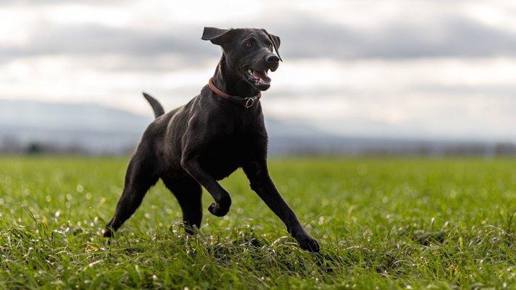 毛色が黒い犬あるある5選