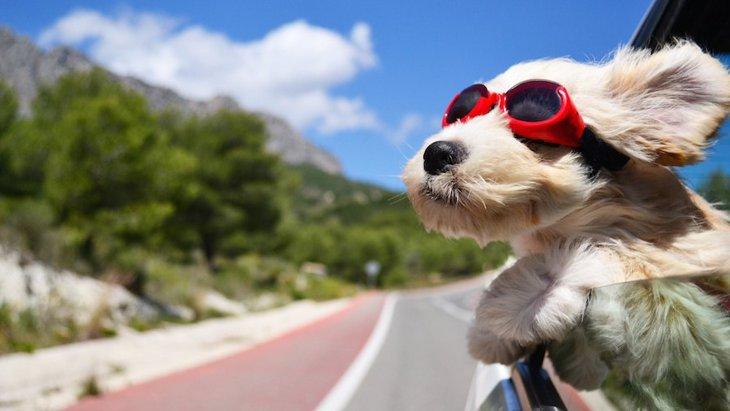 愛犬と楽しくおでかけ!~犬の車酔いと対処法~