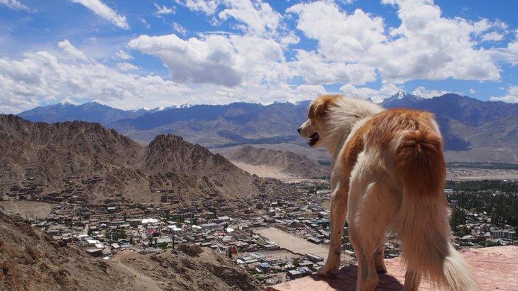 なぜ犬は高いところに乗るのが好きなのか?