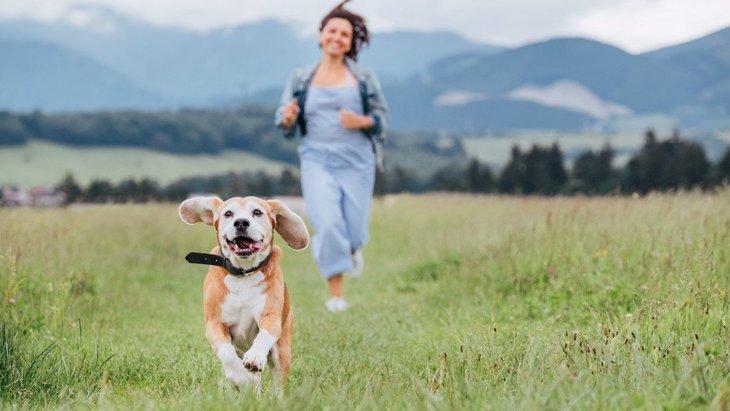 犬は散歩だけしていれば『運動』は必要ない?犬種別に必要な運動量とは?