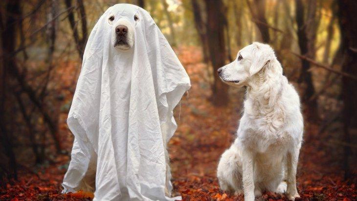 幽霊が見えているかも?愛犬の不気味な行動4つ