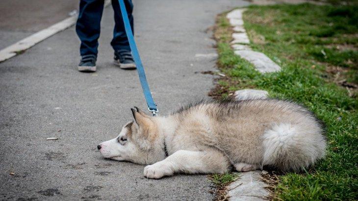 犬が散歩で動かなくなってしまう心理3つ!無理やりにでも帰らせるべき?