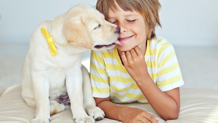 犬の世話と育児は両立できる?