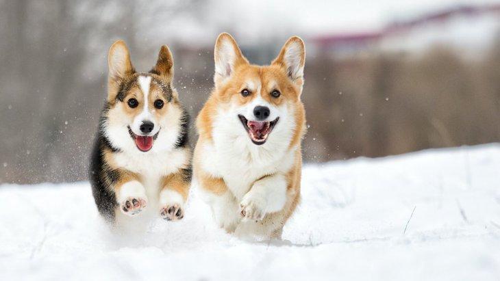 雪の日に犬の散歩をする時のNG行為4選