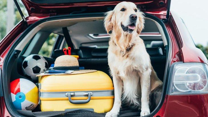 犬とのお出かけで起こりがちなトラブルと対策