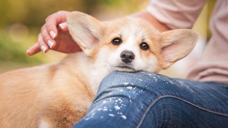 犬は飼い主を何で判断してる?犬がやってる「見分け方」