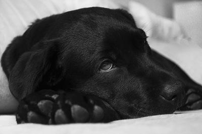 犬がお祈りポーズをする意味とは?病気の可能性やプレイバウとの違い