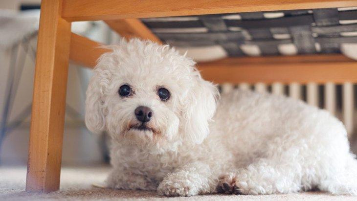 犬が体を丸めている時の心理4選!体調は悪くない?どういう意味があるの?
