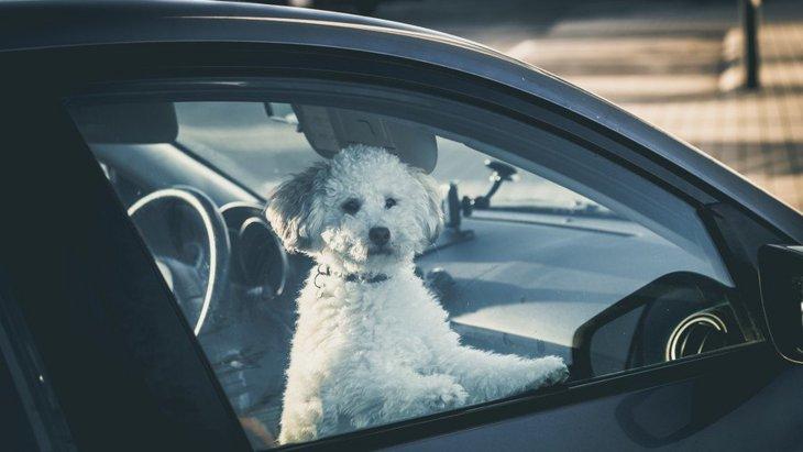絶対NG!犬を夏の車内でお留守番させると死に至ることも