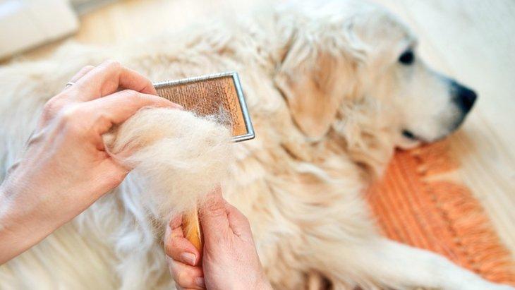 犬の換毛期は何月?時期や期間から対処法まで