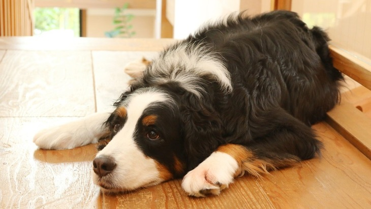 大型犬を飼うと苦労する7つのこと