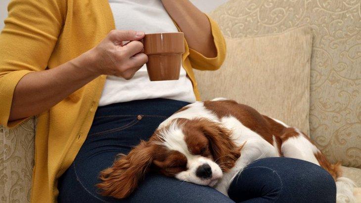都内で保護犬のいるカフェ3選!犬を引き取って里親になるには