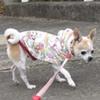 小さい子は寒がりなんです!小型犬のわんちゃんとお出かけするときの注意点