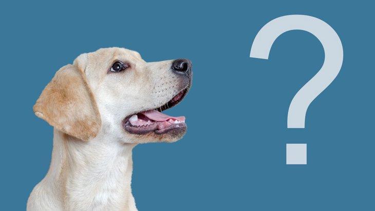 全問正解できる?犬にまつわる『雑学クイズ』9選