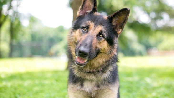 犬は人間の言葉を理解する能力がある?実際の研究結果を交えて解説