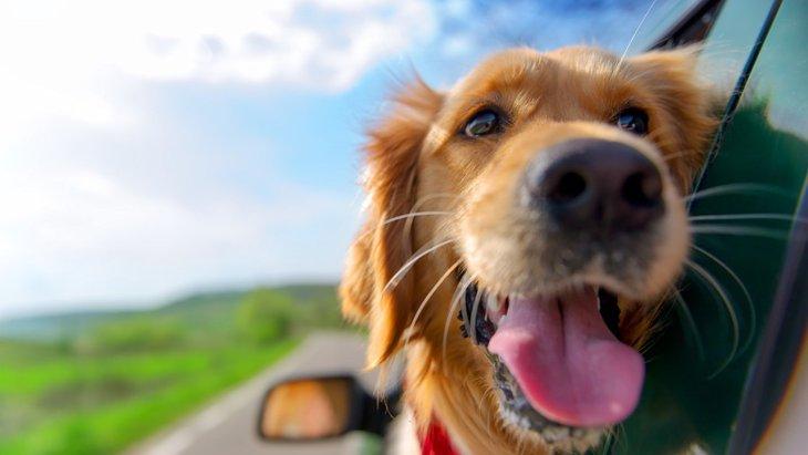 犬が車の窓から顔を出す心理3つ