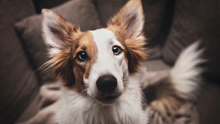 犬が人に『頭突き』をする心理5つ