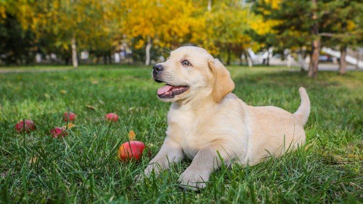 犬が臍ヘルニアになる原因と現れる症状、治療法について