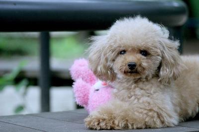 犬の肝硬変について 症状や治療法など