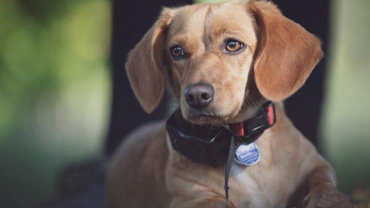 報酬ベースの犬のトレーニングは罰を使うよりも効果的という研究結果