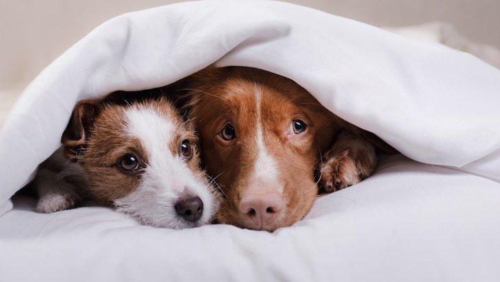 犬は寒さを感じているの?