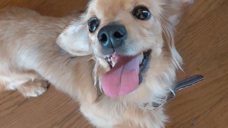 保護犬を飼って変わったこと…それは『笑える時間』が増えたことでした