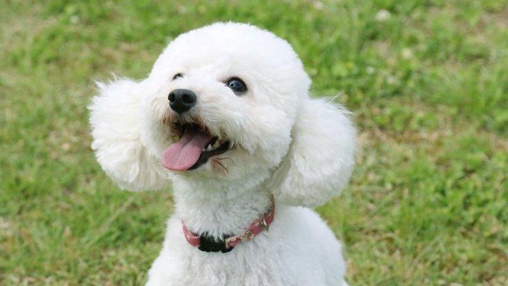 愛嬌たっぷり♡人懐っこい子が多い犬種5選