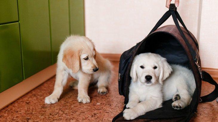 おしゃれな犬用キャリーバッグ おすすめ5選