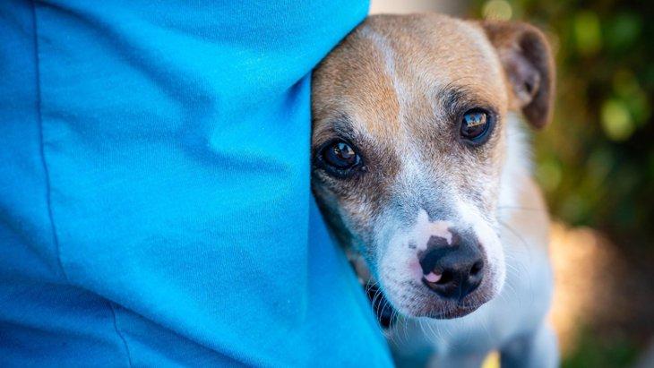 『飼い主に依存している犬』の特徴4選!どんな悪影響が考えられるの?