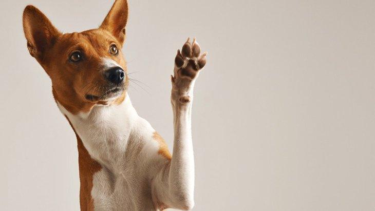 犬が『お手を勝手にしてくる』時の心理4選