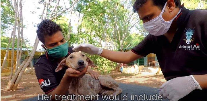 衰弱と皮膚病に苦しむ犬。救助後は完治し元気な身体を取り戻しました!