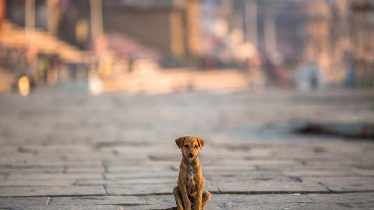 どうしよう!愛犬が迷子になった時に飼い主ができること5つ