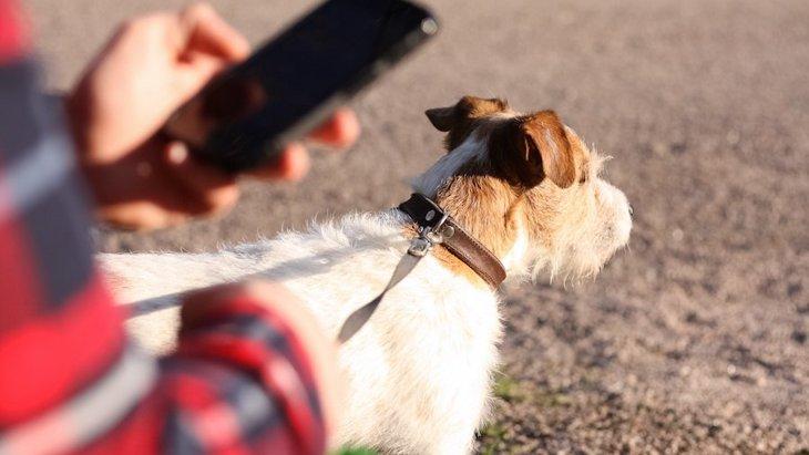 あなたがスマホを見ている時、愛犬は落ち込んでいる?