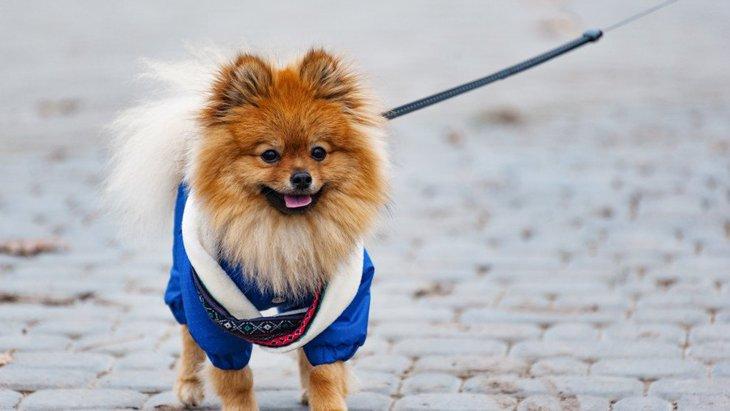 犬にもビタミンは重要な栄養素!必要量や不足時の危険性まで