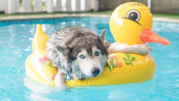 運動神経があまり良くない犬がする行動3選