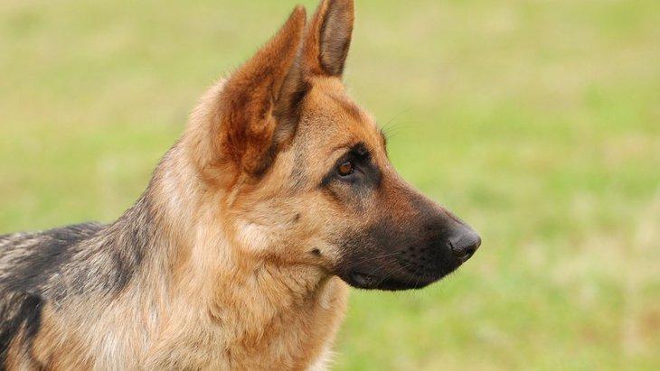 考古学の発掘現場で犬の嗅覚が活躍!