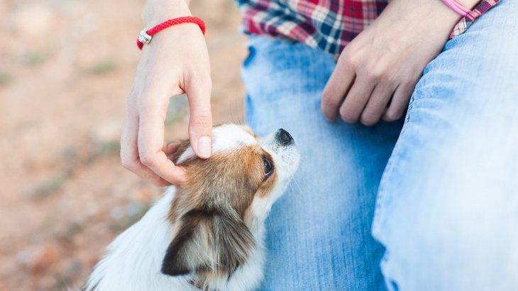 犬にとって『触られるメリット』はあるの?撫でるのは効果アリ?