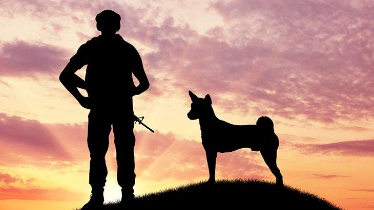 忘れ去られた犬の特攻隊 〜戦争の記憶を風化させない〜