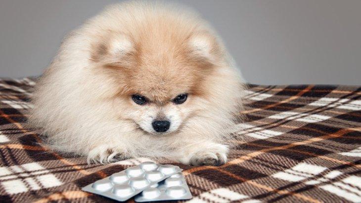 犬の胃腸炎 原因や症状、治療法から予防法まで