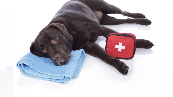犬の『死亡率』が高い事故4選