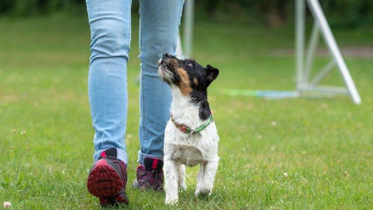 犬の作業能力は『飼い主の行動によって影響される』という研究結果
