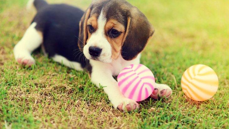 犬を遊びに誘っても喜んでくれない理由とやりたい対策