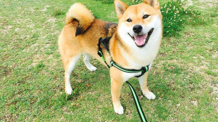 犬がよくする3つの『散歩アピール』