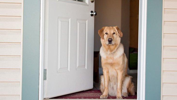 犬の『謎行動あるある』4選