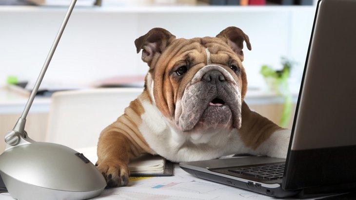 犬を題材にした自由研究8選