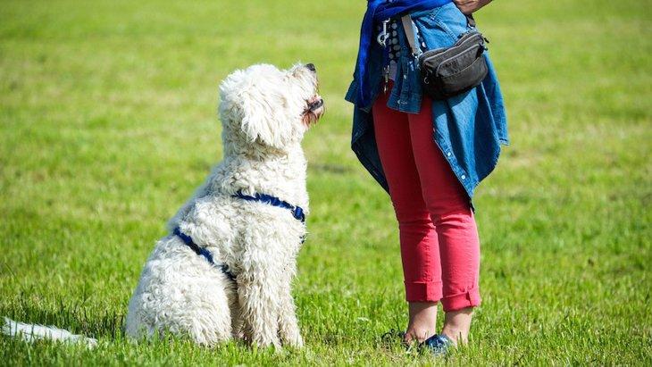 犬に「伝わりやすい言葉」と「伝わりにくい言葉」の違いとは?