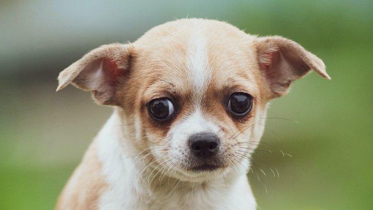犬が『不安』になっている時にする仕草や鳴き方6選