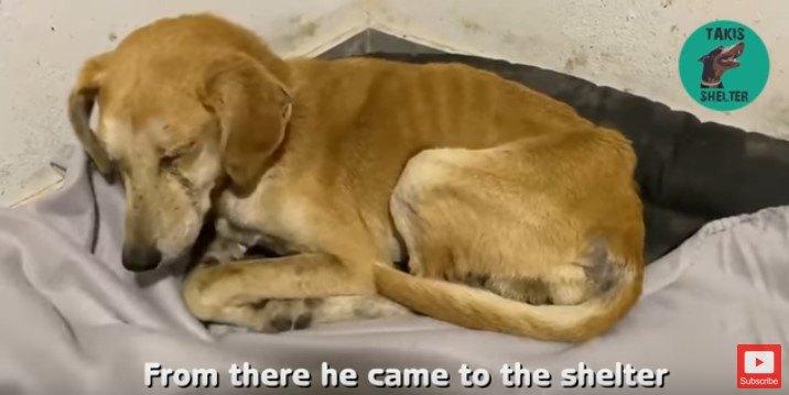 放置された3本足の犬を保護。無気力からよみがえった生きる力!