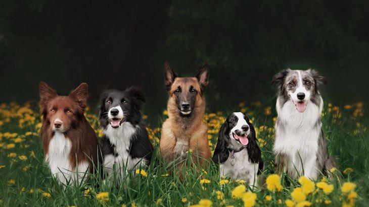 初心者向けではない犬種4選