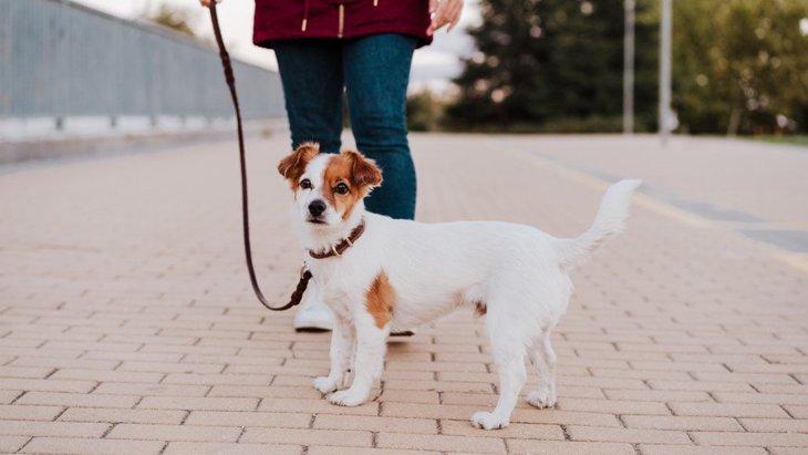 犬の散歩は毎回違う道の方がいいの?同じルートを通るべき?